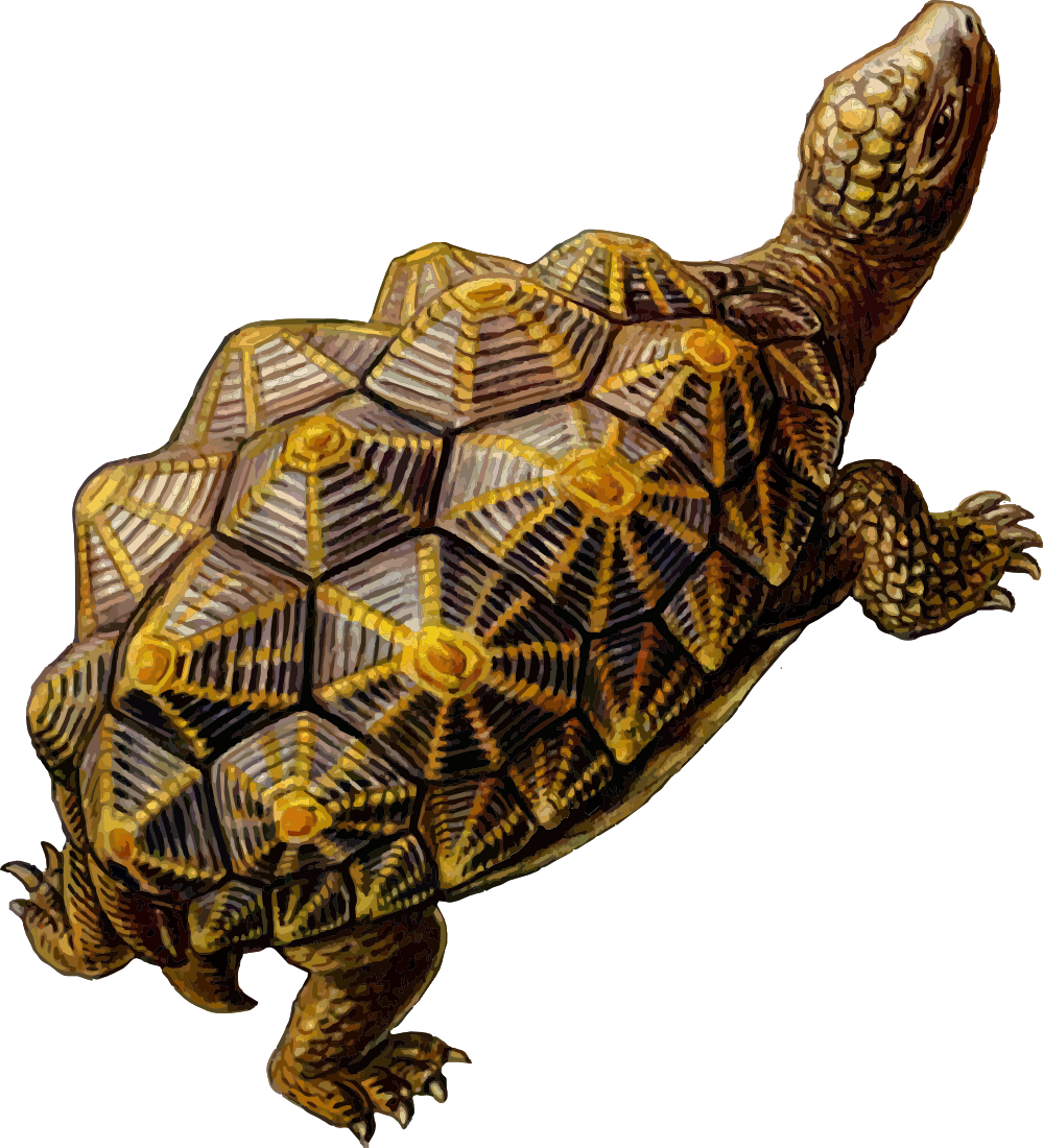 Turtle Download Free Images