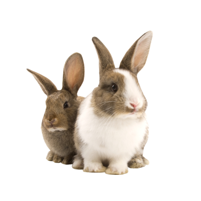 Two Rabbit Png image #40323