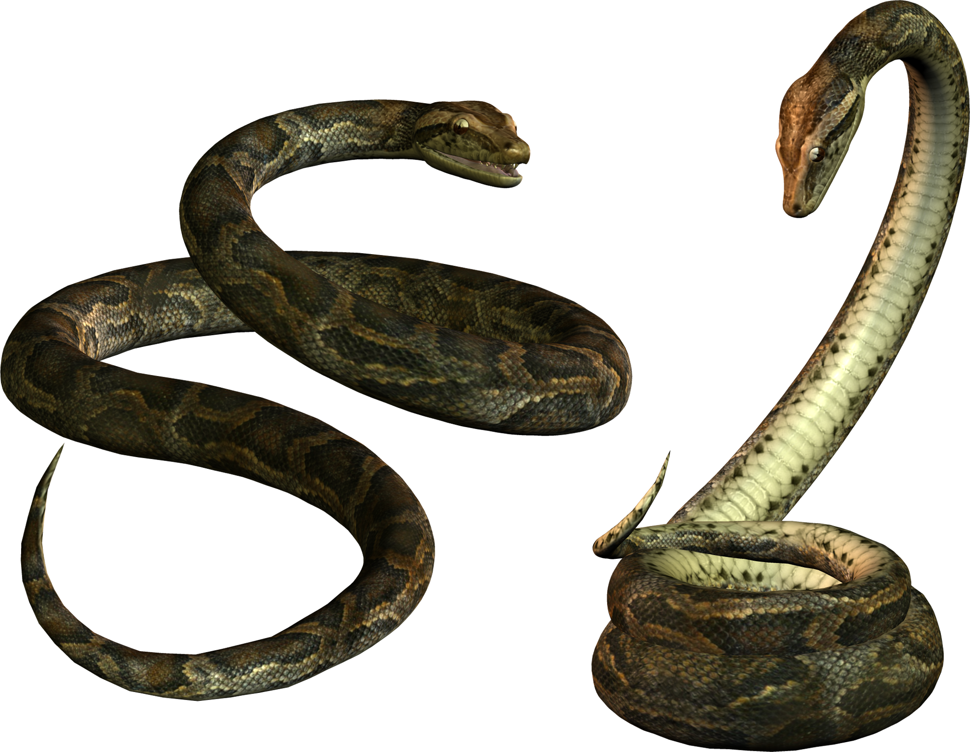 Two Snake PNG image #3634