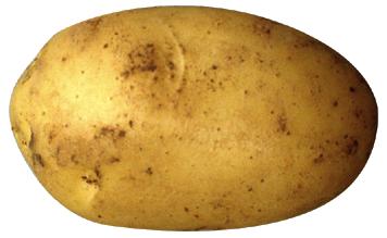 Vegetables potato png