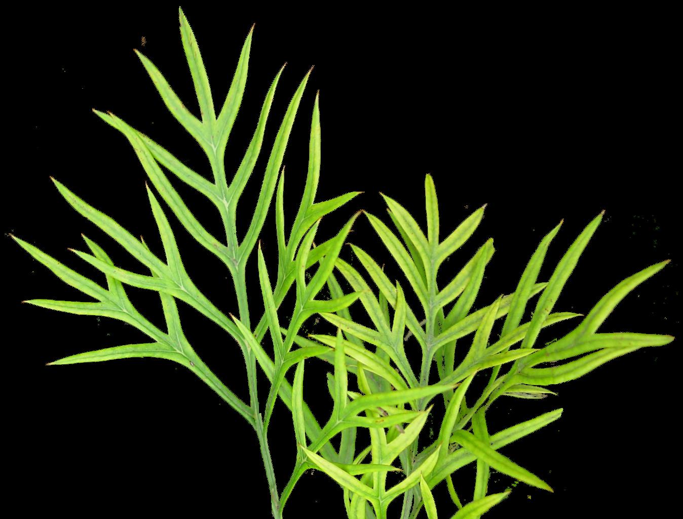 vegetation textures plant png