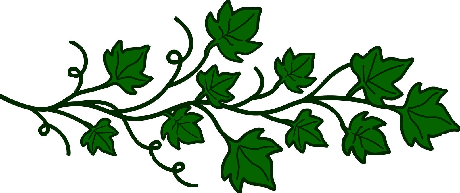 Vine Clipart Transparent Png image #43673