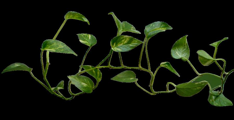 Vine Logo Transparent Png image #43650