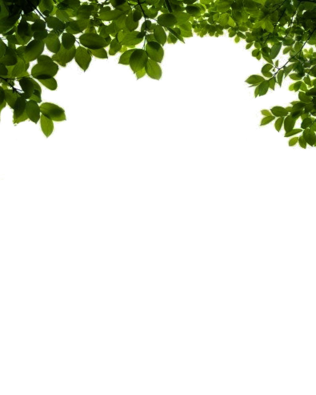 Vines Branch in Plants Png