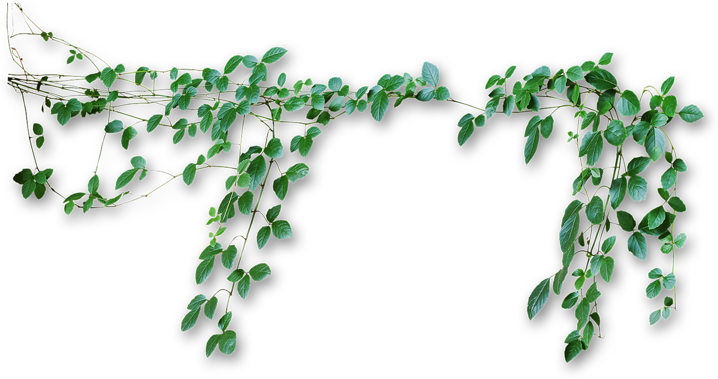 Vines Png image #43677