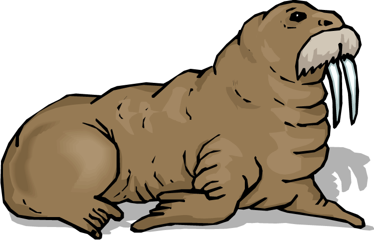 Walrus With A Mustache Drawn Images image #48632