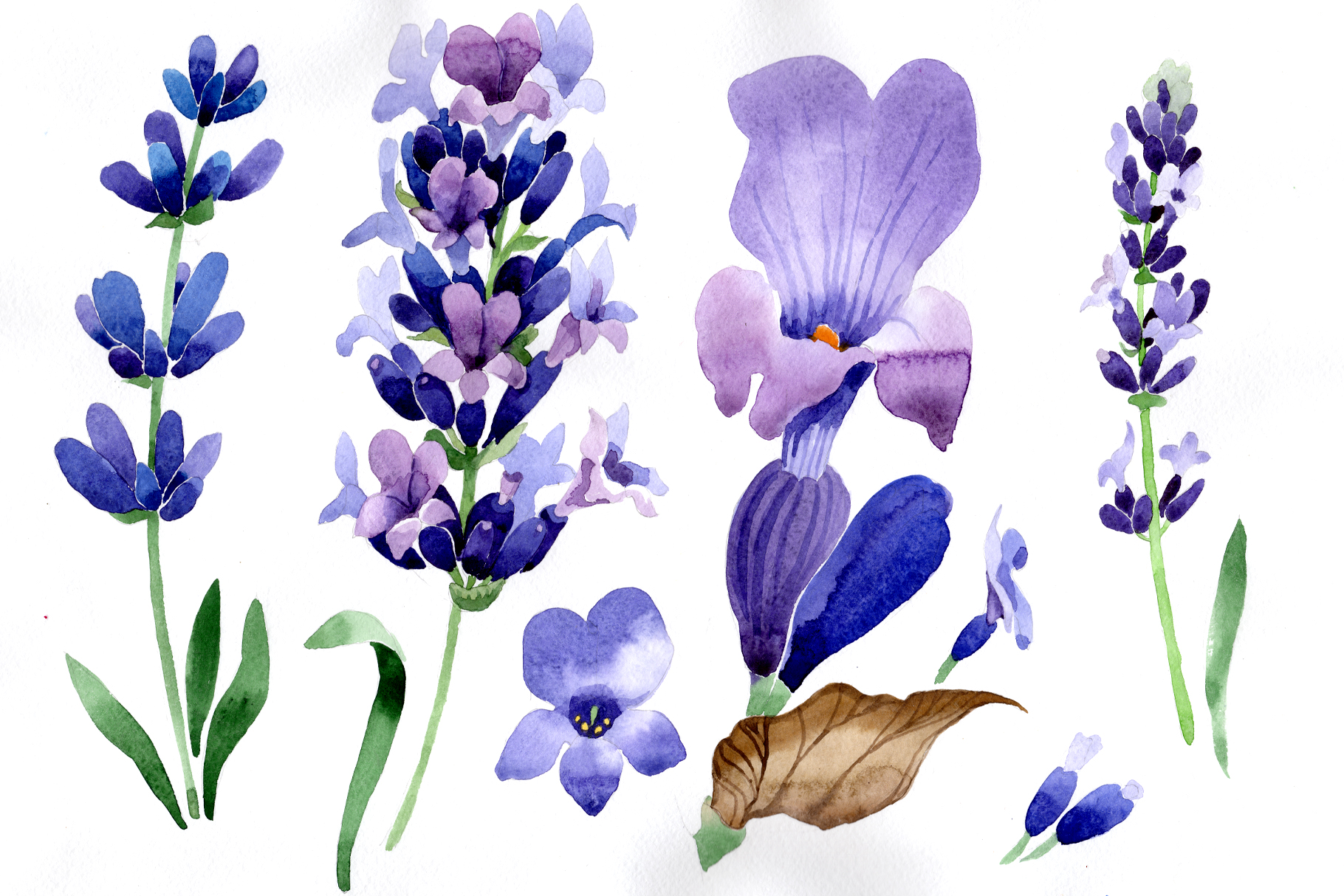 Watercolor Purple Flowers Symbols Lavender image #46965