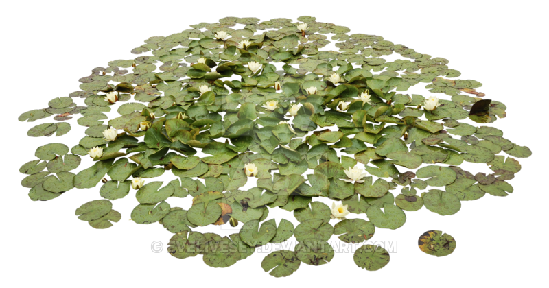 Waterlily Pond PNG image #10901