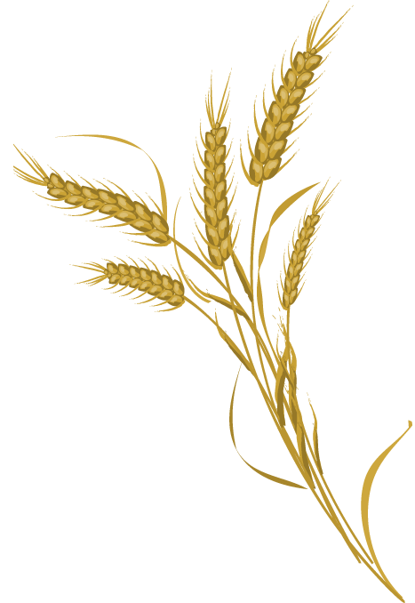 Wheat Transparent Pictures