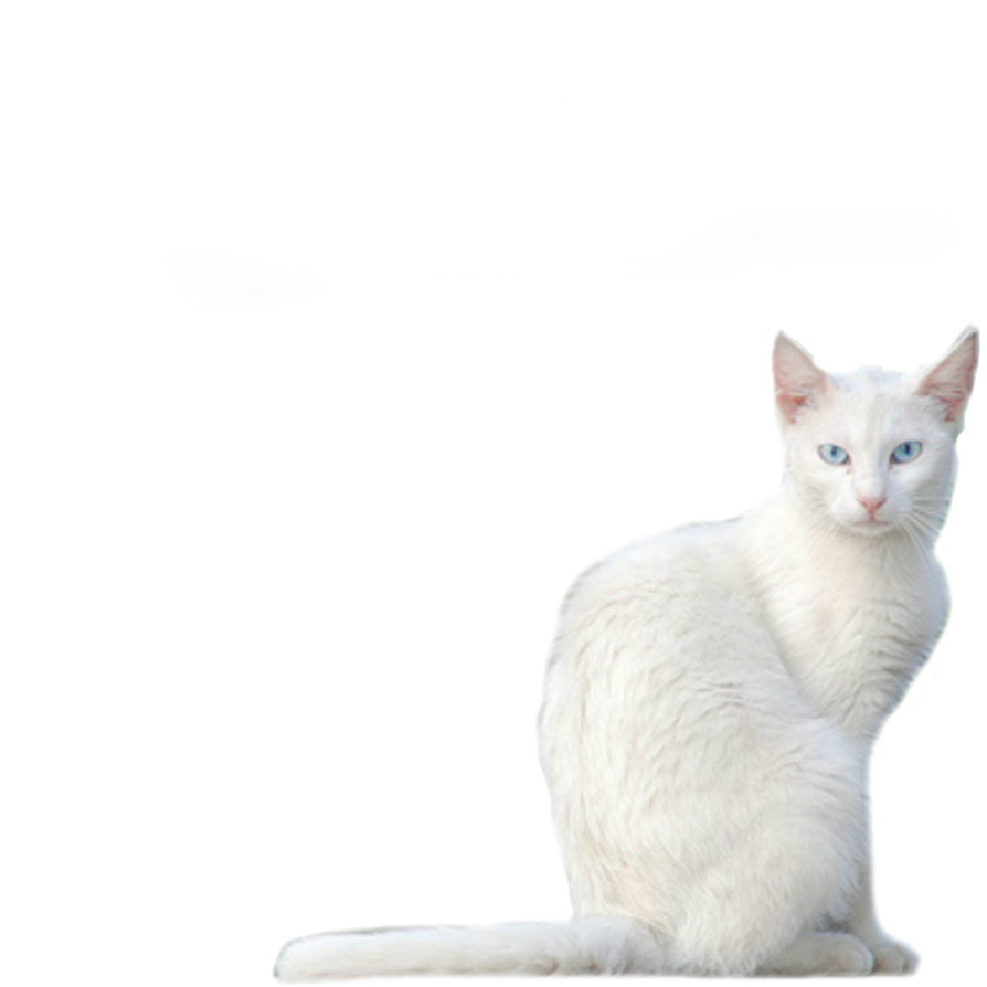 White Cat Png image #40369