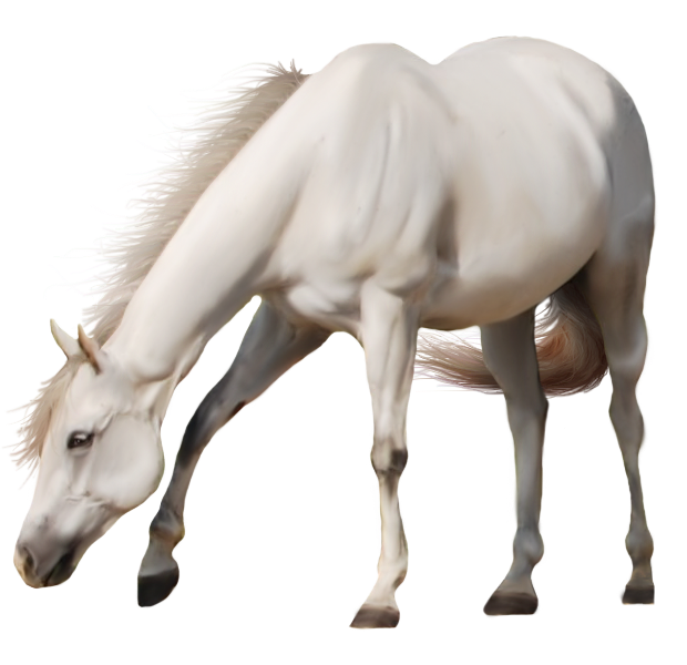 Horse PNG Photo image #22554