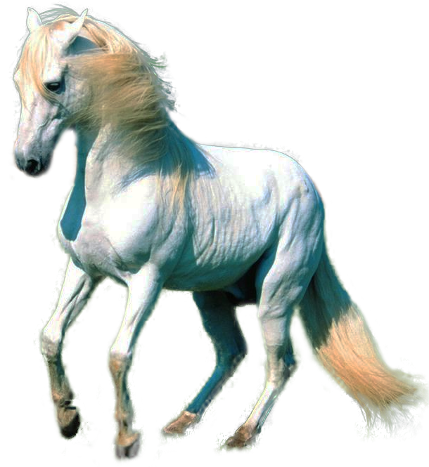 Clipart Horse Collection Png image #22555