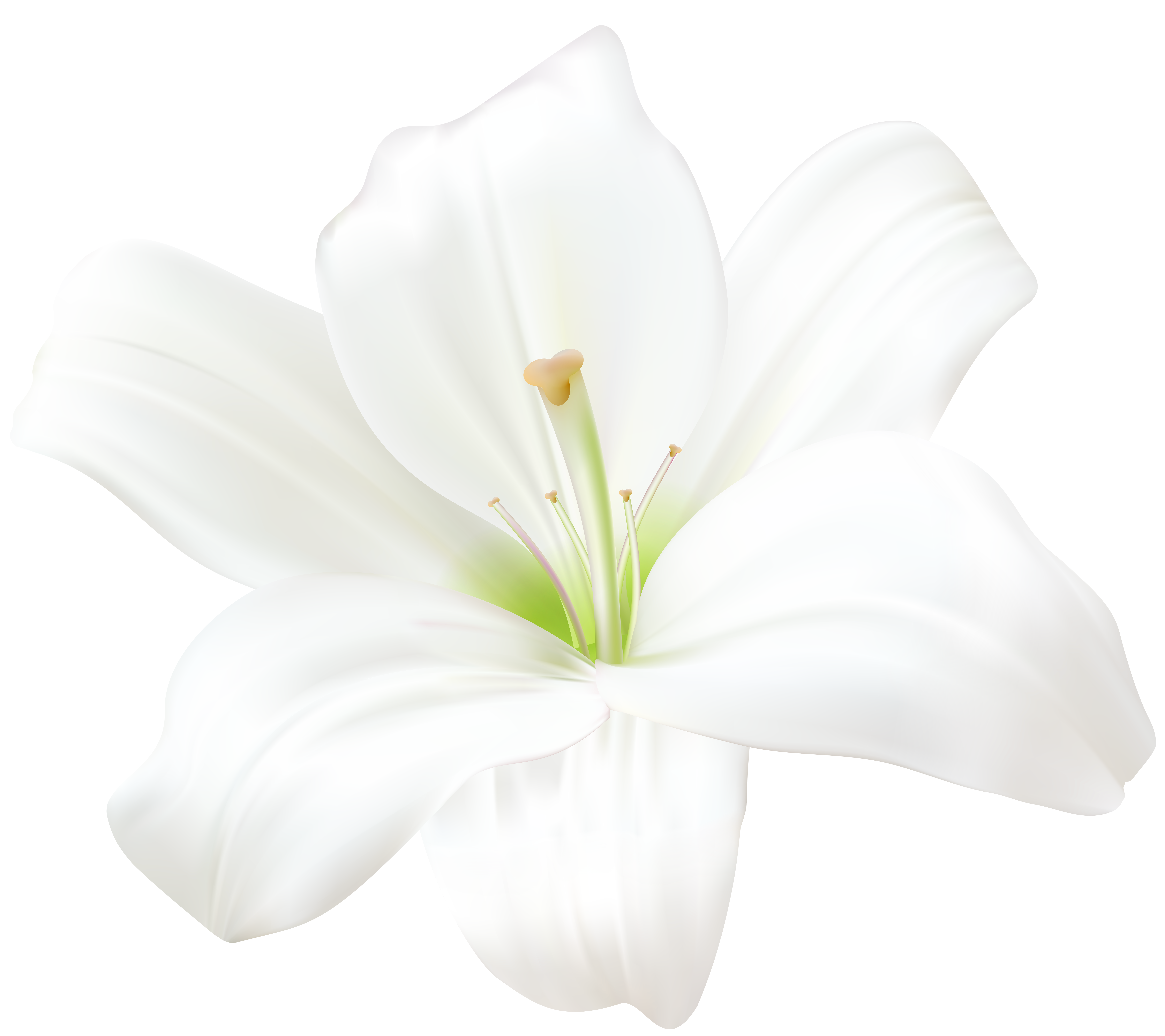 White Lily Png 46482 Free Icons And Png Backgrounds