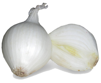White Onion Png image #38750