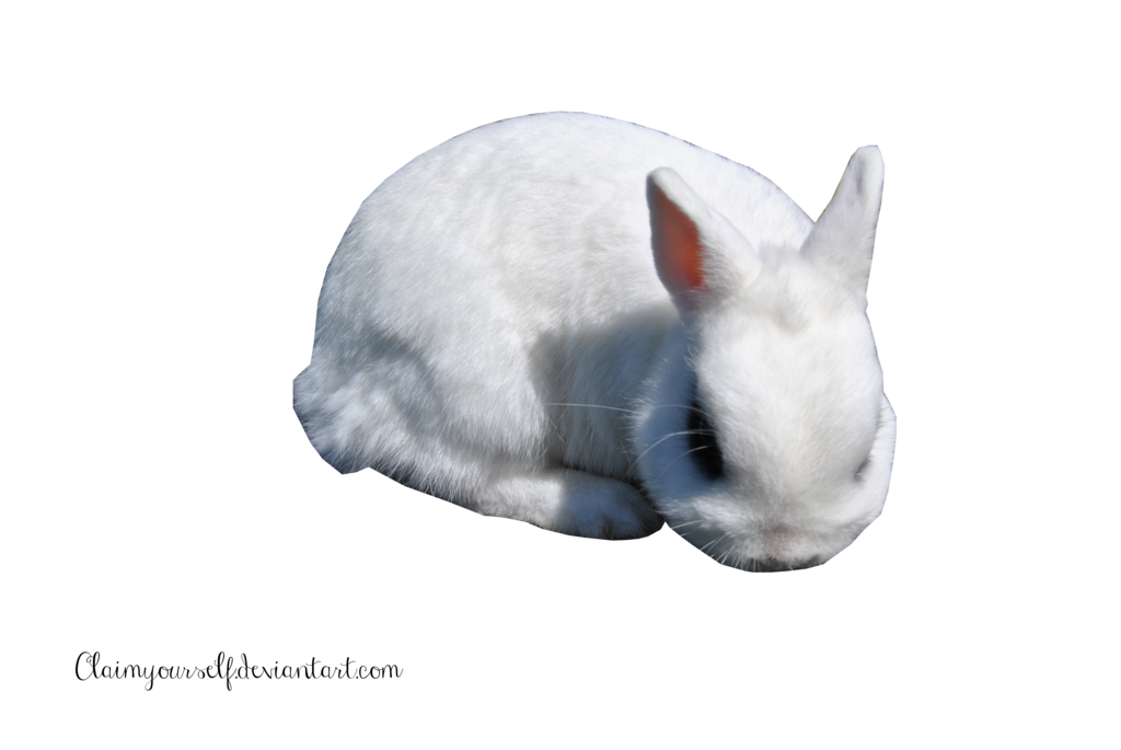 White Rabbit Png image #40319