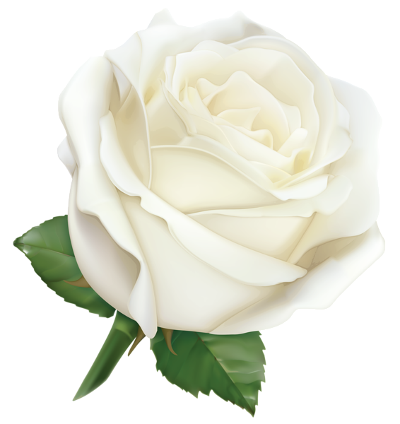 White Rose PNG Hybrid Tea Rose Leaf image #48793