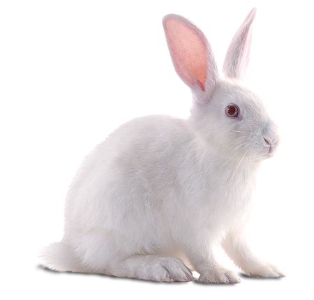 White Sweet Rabbit Png image #40321