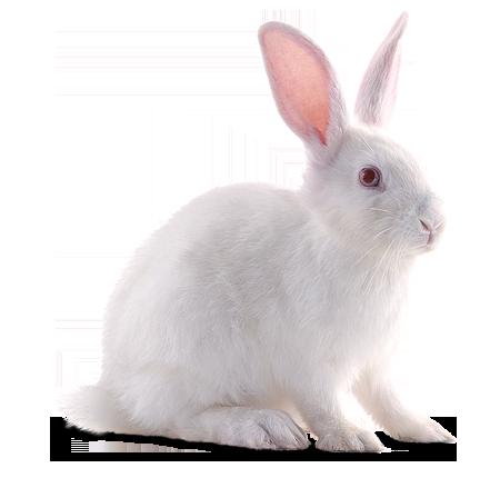 White Sweet Rabbit Png image #40321