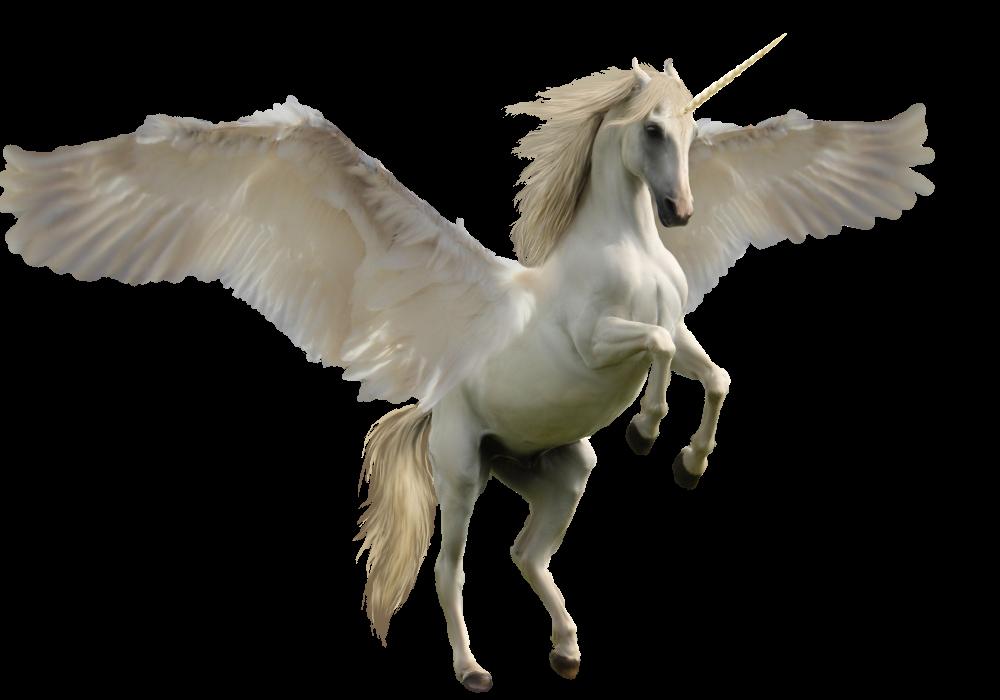 White Unicorn PNG