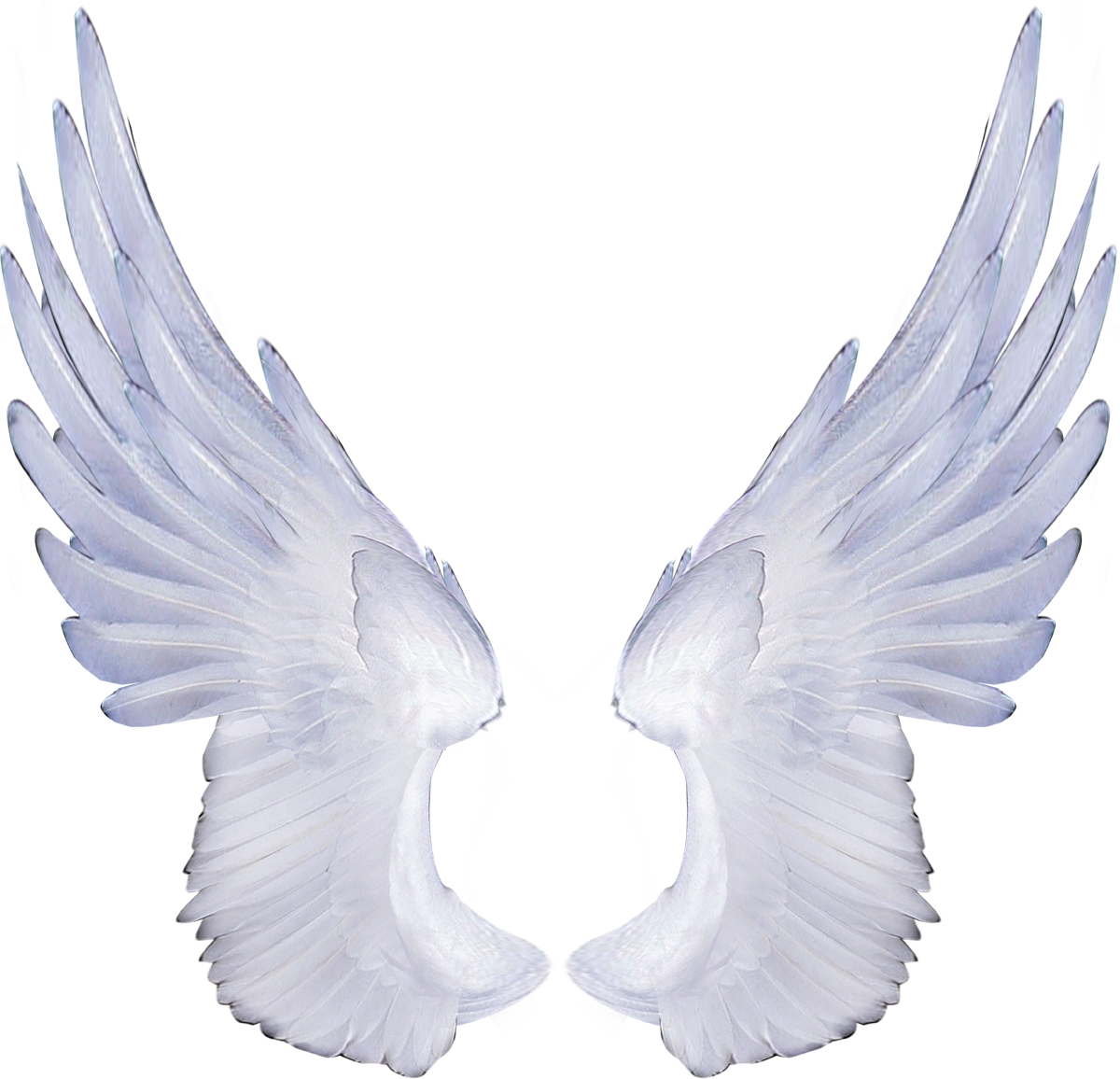 Png Clipart Download Wings image #36459