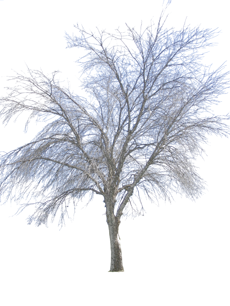 Vector Png Winter