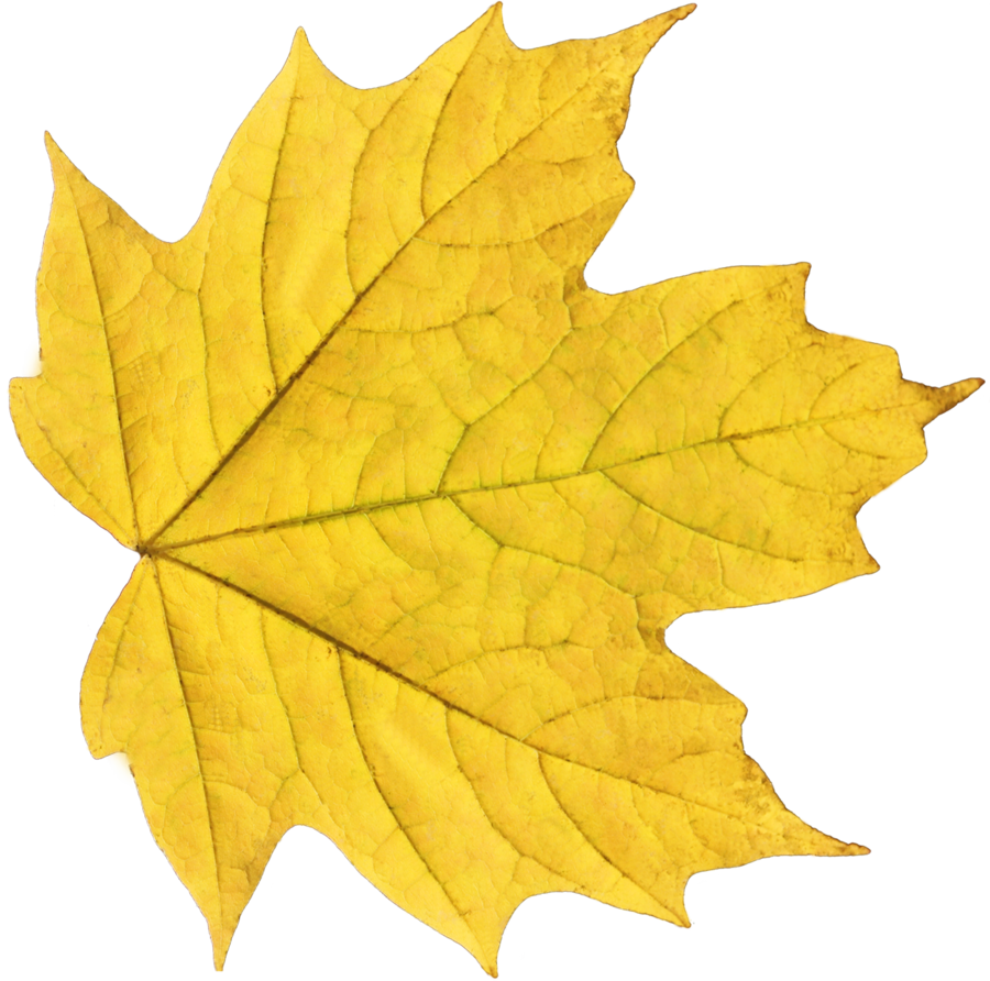 Yellow Fall Leaf Png image #38634